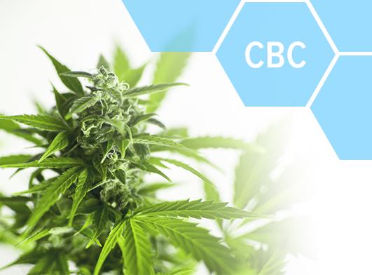 terpenes cannabinoids