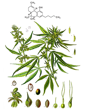 what is thc oil