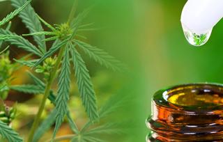 industrial hemp vs cannabis