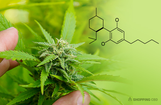 cannabidiol as a different type of an antipsychotic: drug delivery and interaction study (cbd-is)