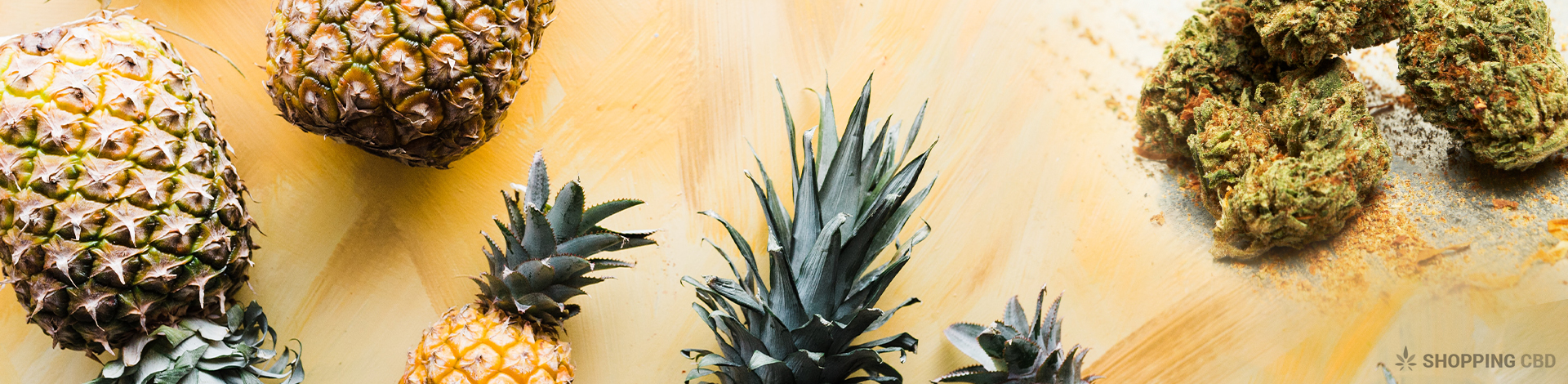 pineapple express cbd terpenes