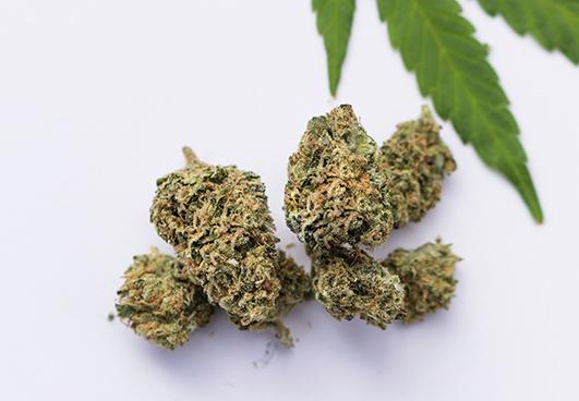 high cbd strains list